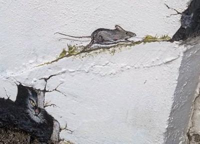 Aberporth Mouse Trail